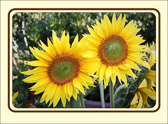 Every friend is to the other a sun, and a sunflower also. He attracts and follows.